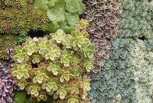 Garden&Flora / by Toscha Turner