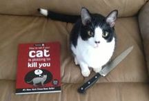 Purr evil / Evil cats that seem to be plotting your demise