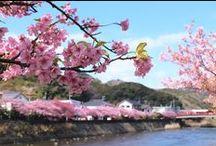 共和AMEL日本の四季