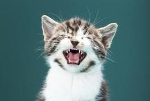 WE LOVE CATS