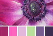 Paint Colors / Paint colors