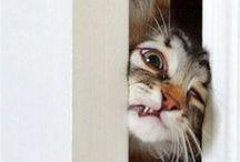 gatti!!!
