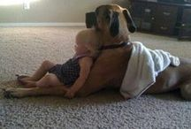 Animals :))