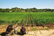 Cycling in Portugal / Bicycle touring in Portugal / by Bicycle Touring