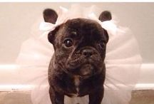 Are these cute or what? / Funny and cute pictures of some pets!