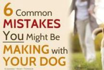 Click here for pet advise!
