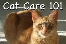 Cat Health Tips
