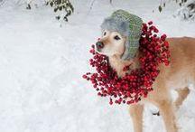 Winter Entertaintment