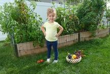 Our Organic Gardens:  Making it Easy / Yard2Kitchen designs, installs, and maintains organic raised bed gardens for homeowners.  See how easy it is to have your own backyard produce garden!