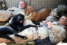 Military Families & Pets