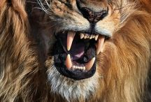 Animaux / Wildlife / Animals around the world