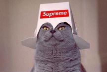 I luv cat