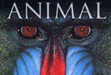 Animales. Libros informativos / Leemos para saber... sobre animales. CEIP La Senda. Curso 2014-15