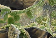 Scanning microscope