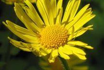 Blooming Flowers / Flowers,flowers,flowers