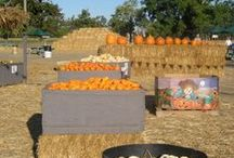 Top 11 Pumpkin Patches in the Bay Area / Don't forget to get pumpkins to carve this Halloween! It is great fun for the whole family to go pick out your own pumpkins. Here's our list of the top 11 pumpkin patches in the Bay Area for you to visit this year!