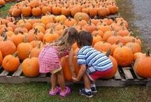 Top 8 Pumpkin Picking Farms for Families in New Jersey / Don't forget to get pumpkins to carve this Halloween! It is great fun for the whole family to go pick out your own pumpkins. Here's our list of the top 8 pumpkin patches in New Jersey for you to visit this year!