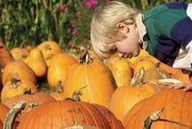 Top 12 Pick-Your-Own Pumpkin Patches Near NYC / Don't forget to get pumpkins to carve this Halloween! It is great fun for the whole family to go pick out your own pumpkins. Here's our list of the top 12 pumpkin patches near New York City for you to visit this year!