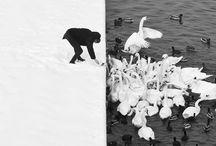Mono / Black & white pictures