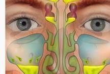 ΩΡΛ / Υγεία του αναπνευστικού συστήματος, της μύτης, του λάρυγγα και των αυτιών.