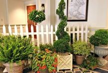 Wedding Plant Rentals - Williamsburg Floral / We often get requests from brides about plants that we can use to fill spaces and soften the area with less cost than flowers. Here is a sampling of the plants we have available for rent.