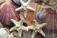 Cosas del mar
