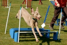 'ALL ABOUT DOGS' 2013 / All the action from the 'All About Dogs' event 2013!