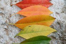 Biek ~ Seasons