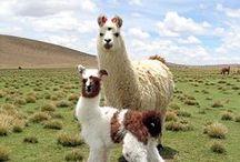 Bolivia / Inspiratie uit Bolivia, het land van Casa de la Alegría, de stichting waar ik voor werk.