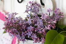 Сирень / Lilac