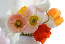 Мак / Poppies