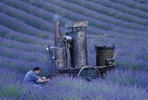 French Country Charm / France is a most magical place to be........an experience that is unforgettable. / by Julie Monda