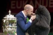 CRUFTS 2014 / All the action from Crufts 2014!
