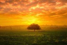 Wunder in der Natur
