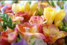 ÇİÇEKLER / Dünya üzerinde yetişen çiçekler / by Hayriye Dören Meriç