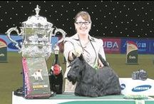 CRUFTS 2015 / All the action from Crufts 2015!
