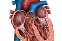 Medical Illustration / Medical illustration works by Rosa Marín Ribas independent ill ustrator