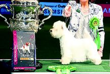 CRUFTS 2016 / All the action from Crufts 2016!