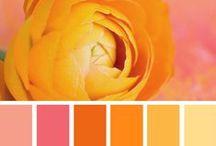 Craving Colour / Scrumptious bursts of colour pallets x
