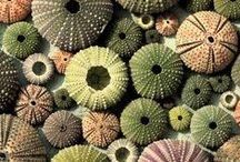 shells and sea glass / shells, sea glass