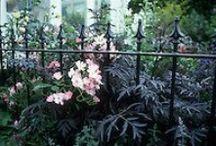 Garden plant ideas spooky garden / Gardening, spooky plants, gothic atmosphere