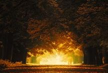 LEAVES FALL / Herbst Fall Autumn Automne El Otono Autunno Jesien