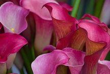 Flowers / by CHORISSA