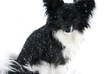 Puppy Love / by Jessica Botelho