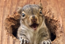 #Squirrel / by Doyle Wheeler
