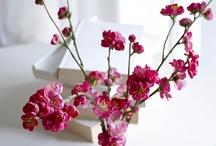 Blossom / by Samar Maatouk