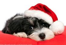 SANTA PAWS / Festive animals. A Christmas pet lovers' board by animal behaviourist, Dr Joanne Righetti. Merry Xmas pet lovers :) N.B. The animals in these pics are all safe & enjoying the fun. I do not post photos of animals wearing restrictive costumes, eating tinsel or wrapped in lights. You and your pets stay safe over Xmas.