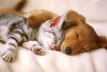 ANIMAL FRIENDS / Friendships can form between animals of all kinds