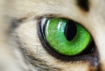 CATS EYES & WHISKERS / Stunning pics of beautiful feline eyes & fabulous whiskers. A board by animal behaviourist Dr Jo.