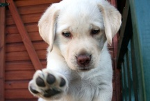 PAWS / For those who love pet paws!